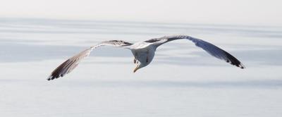 Чайка на охоте чайка фотоохота море