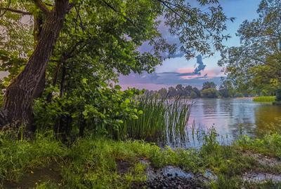 После ливня озеро вечер закат тучи облака берег трава ивы лес дождь