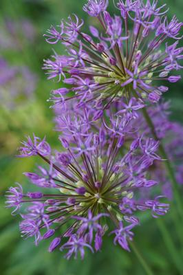у дома природа макро цветы