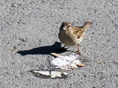 Сладкоежка птицы воробьи лето