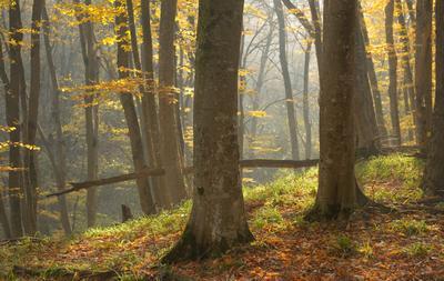 Осеннее утро лес утро осень