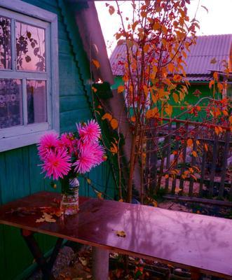 Вспоминая октябрь осень,октябрь,листопад,цветы,фото сергей сиденко