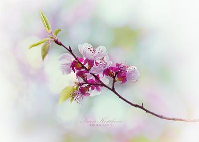 Весна в японском стиле