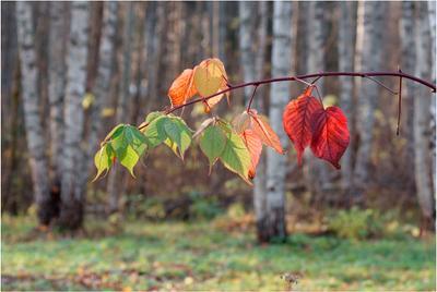 Октябрь уж наступил... Осень Ежевика