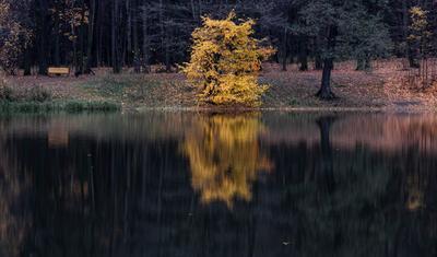 *** осень природа