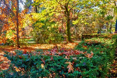Осень Сочи парк Ривьера конец осени день
