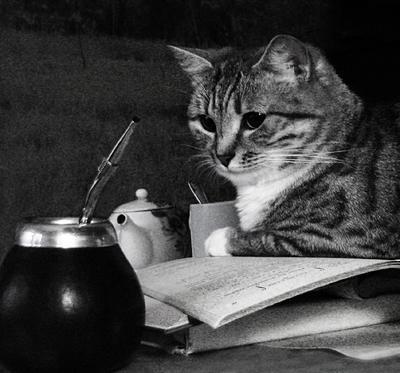 ночные бдения кошка Симка