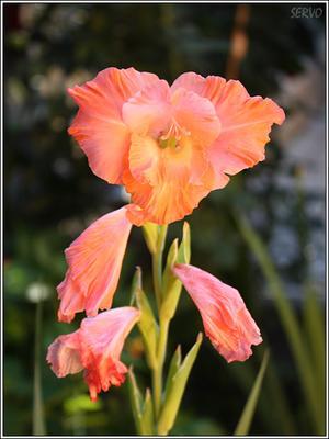 МакроЦветы/7 цветок