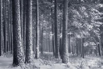 Седой лес... лес зима снег деревья в снегу