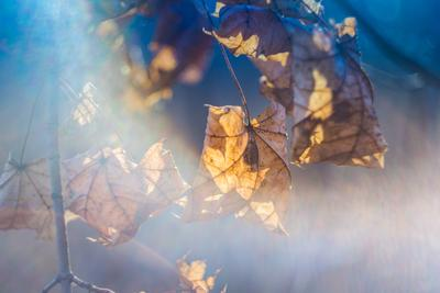 *** Лист солнце природа осень