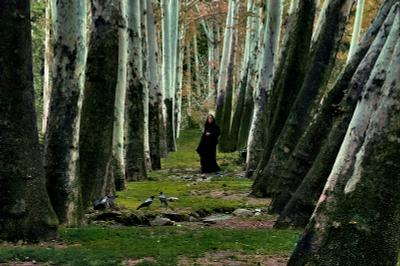 Song of forest Иран Тегеран
