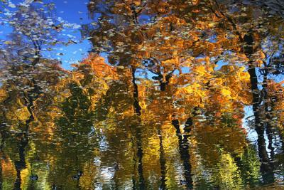 Осень рисует октябрь, Петербург, парк, отражение