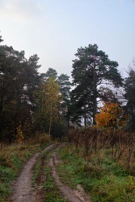Осень.Утро