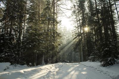 туманный день февраля) зима природа лес туман мороз снег солнце тени ели февраль
