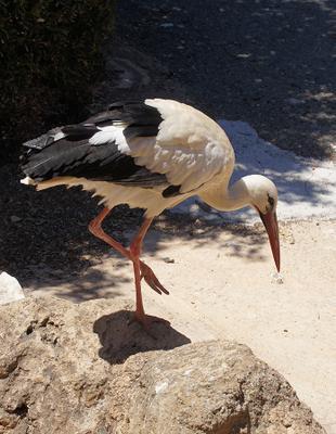 *** Кипр птицы аист