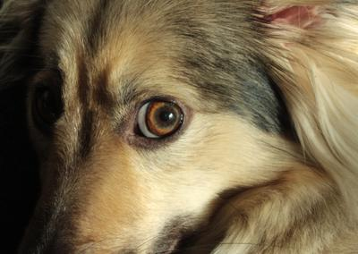 *** собака морда глаз