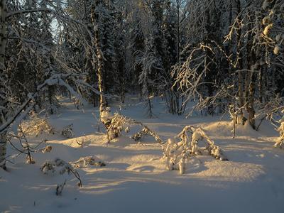 Таежное утро. Зима мороз снег тайга лучи