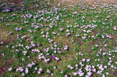 вспоминая весну 4tic ковер весна цветы