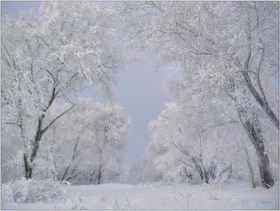 зимы кораллы... природа зима деревья снег иней мороз небо