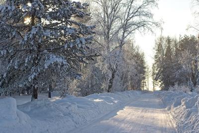 зимний путь) зима природа лес мороз прогулка снег иней солнце тени дорога