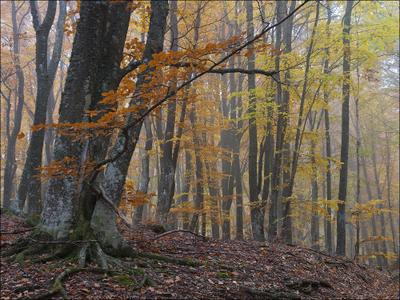 Осеннее утро Крым Чатыр-Даг осень лес