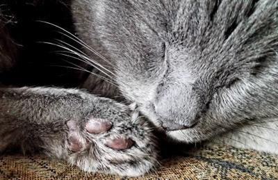 УСЫ-ЛАПА-НОС Усы лапа нос Кошка