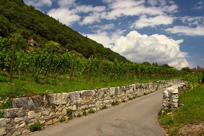 крепитесь, люди, скоро лето! виноградники лето Бильское_озеро Швейцария