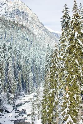 Домбайские пихты природа горы пейзаж горнолыжный курорт снег