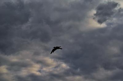 Перед бурей. Весна небо чайка гроза тучи