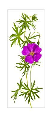 Цветок из лесу...