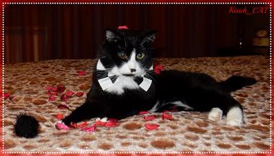 День рождения кот котик бабочка день рождения 17 лет