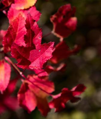 преКрасная осень Осень листья макро свет красный