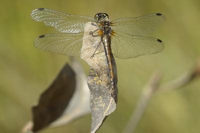 Стрекоза стрекоза лес природа осень