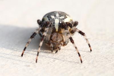 Паучёк паук макро