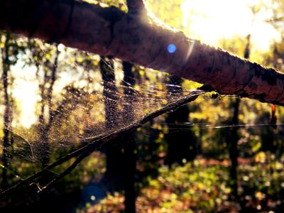 Прогулка по лесу Лес ветви паутина лучи паук