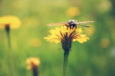 *** цветы лето природа