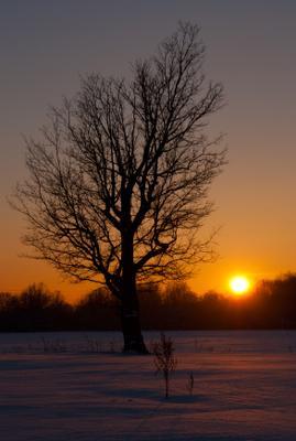 *** зима дуб снег закат