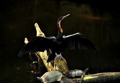 Отдых на солнце природа животные зоопарку черепаха птица