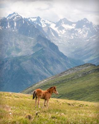Конёк... горы алтай горный жеребёнок конь конёк гора пейзаж природа россия ник васильев красота