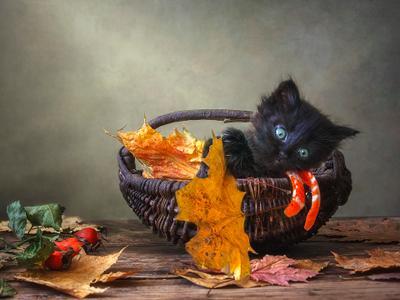 ***По волнам осенней листвы домашние животные черный котенок осень корзинка опавшие листь