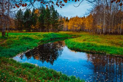 В гостях у осени! (4) Осень Тайга Лес