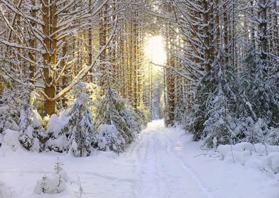 Солнце на лето. зима на мороз Снег солнце лучи