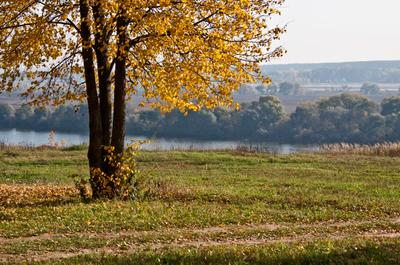 В парке парк, осень, коломна, берег реки