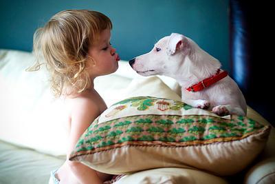 любовь это... джек рассел терьер щенок ребенок поцелуй