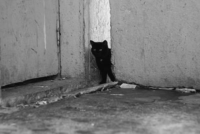 Шпион, выйди вон кошко наблюдает)