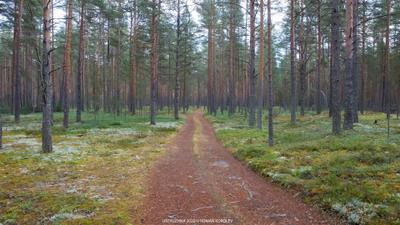 *** лес бор дорога