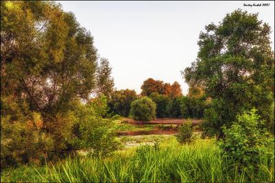 тепло вечернего света река деревья вечер закат свет