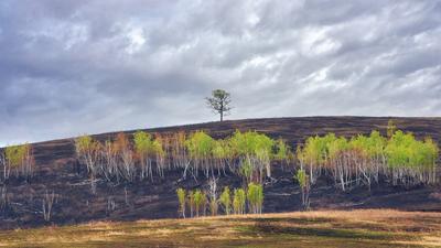 После зимы и после пожара...