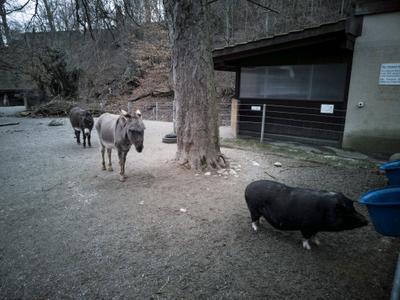 живая очередь Очередь к кормушке в зоопарке Берна