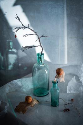 Про осень Осень натюрморт листья дуба галлы веточка боярышник отражение